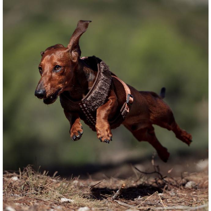 postroj pro psa STAR WARS - CHEWBACCA