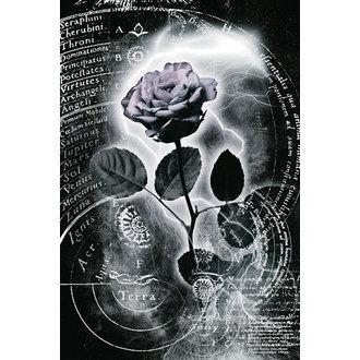 plakát Mercury Rose, Reinders