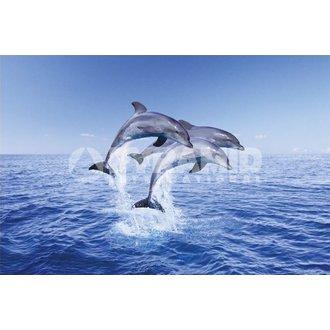 plakát Dolphin Trio - Pyramid Posters, PYRAMID POSTERS