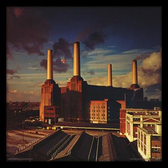 obraz Pink Floyd - (Animals) - PYRAMID POSTERS, PYRAMID POSTERS, Pink Floyd